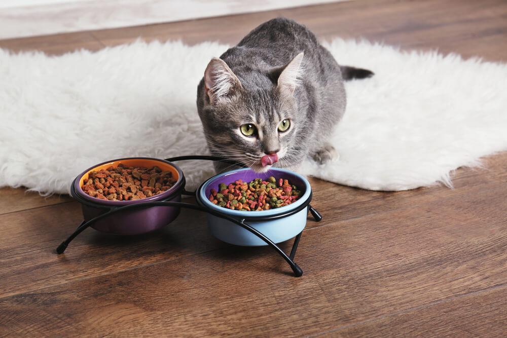 Choisir une alimentation bio pour chat
